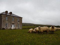 craggy-island-lamb ely CROP